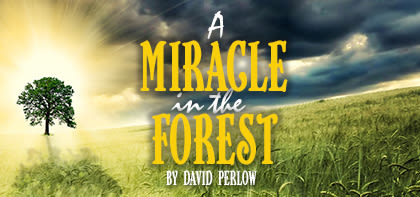A Miracle in the Forest