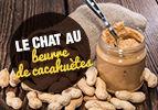 Le chat au beurre de cacahuètes