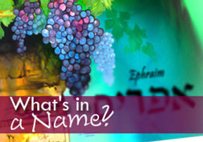 What's in a Name - Mikeitz