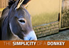 Vayichi: The Simplicity of a Donkey