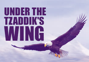 Under the Tzaddik's Wing