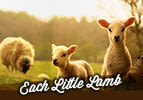 Each Little Lamb