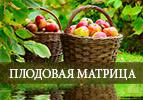 Плодовая матрица