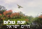 יונת שלום, חיים ישראל