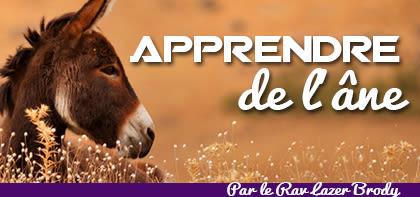 Apprendre de l'âne - Balak