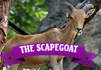 Achrei Mot: The Scapegoat