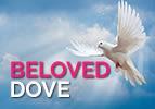 Beloved Dove