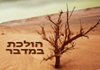 הולכת במדבר