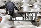 The Black and White Sheep