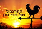 התרנגול של רבי נתן