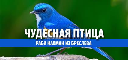 Чудесная птица
