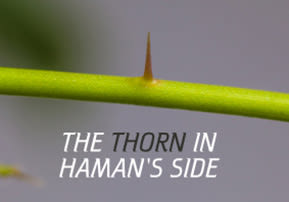 The Thorn in Haman's Side