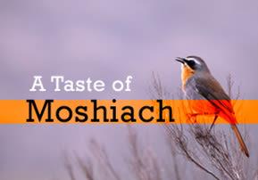 A Taste of Moshiach