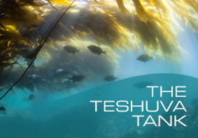 The Teshuva Tank