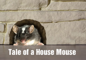 Tale of a House Mouse