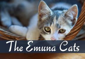 The Emuna Cats