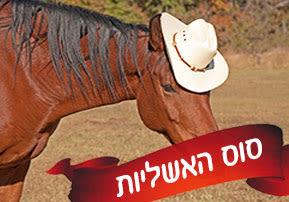 סוס האשליות