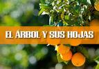 El Arbol y Sus Hojas