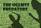 The Ugliest Predators