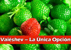 La Única Opción – Vaieshev
