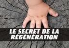 Le secret de la régénération