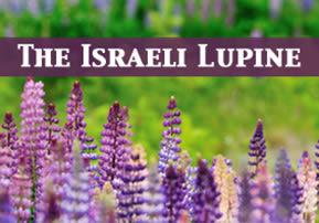 The Israeli Lupine