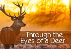 Through the Eyes of a Deer