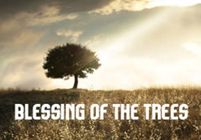 Blessing of the Trees