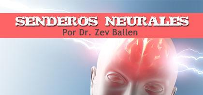 Senderos  Neurales