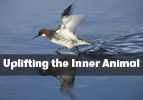 Tzav: Uplifting the Inner Animal