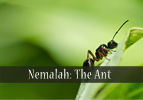Nemalah: The Ant