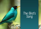 The Birds' Song