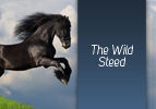 The Wild Steed