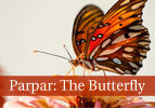 Parpar: The Butterfly