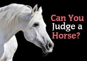 Can You Judge a Horse?
