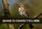 Quand tu chante t'es libre