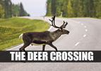 The Deer Crossing