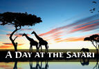 A Day at the Safari