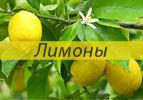 Лимоны (Итро)