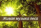 Живая музыка леса