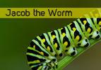 Jacob the Worm