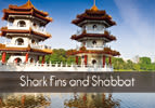 Shark Fins and Shabbat