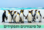 על פינגווינים ותפקידים