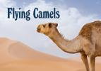 Flying Camels