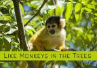 Like Monkeys in the Trees