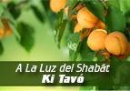 A La Luz del Shabát-Ki Tavó