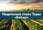 Недельная глава Торы «Беhар» - Беседы о Торе
