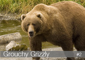 Grouchy Grizzly 2