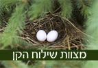 מצוות שילוח הקן - פרשת השבוע כי תצא