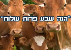 הנה שבע פרות עולות - פרשת השבוע מקץ